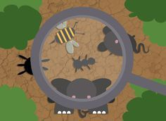 13 recursos educativos sobre animales vertebrados e invertebrados. Para acercarte a las Ciencias Naturales