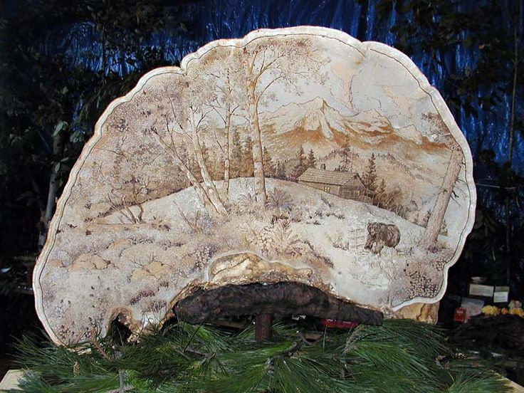 10 Best Art On Tree Shelf Fungus Images On Pinterest