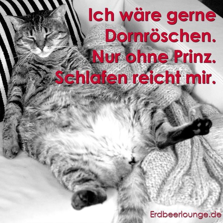 163 besten lustige tiere auch hunde katzen oder eichh rnchen sind witzig bilder auf. Black Bedroom Furniture Sets. Home Design Ideas