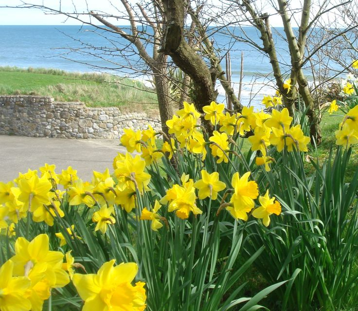 Spring at the seaside cottage gardens.. Yippee!
