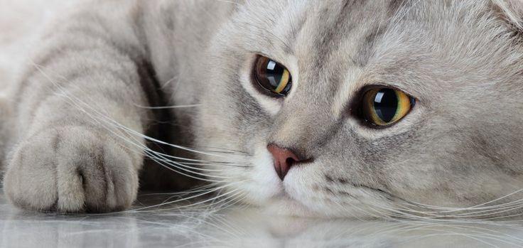 International Cat Day  8/8/2016