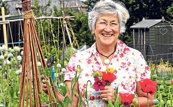 Our gardening agony aunt answers your queries.This week: pruning lavender, plants for damp ground and   fuchsia on a balcony