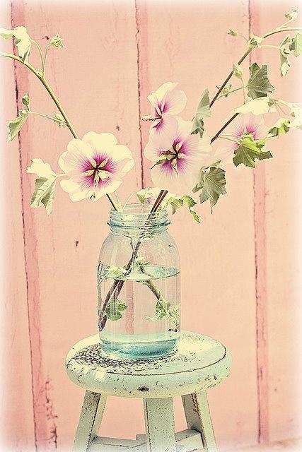 pretty pastel mallow flowers in jam jar