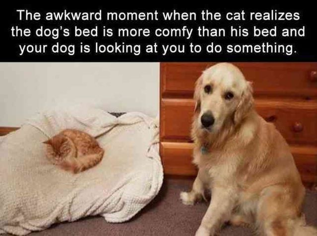 Funny Pictures For Today (#95)