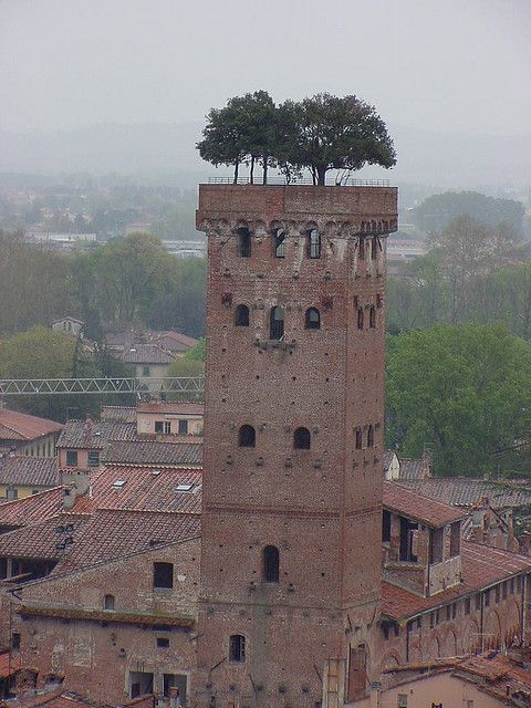 Ultimate roof garden - Lucca Italy APR02 Trees in strange places by jcsulli, via Flickr  https://www.facebook.com/#!/DiMartinoChiropractic: Crazy Trees, Italy Tre, Ultimate Roof, Lucca Italy, Trees Pots Roof Gardens, Italy Apr02, Strange Places, Photo, Apr02 Trees