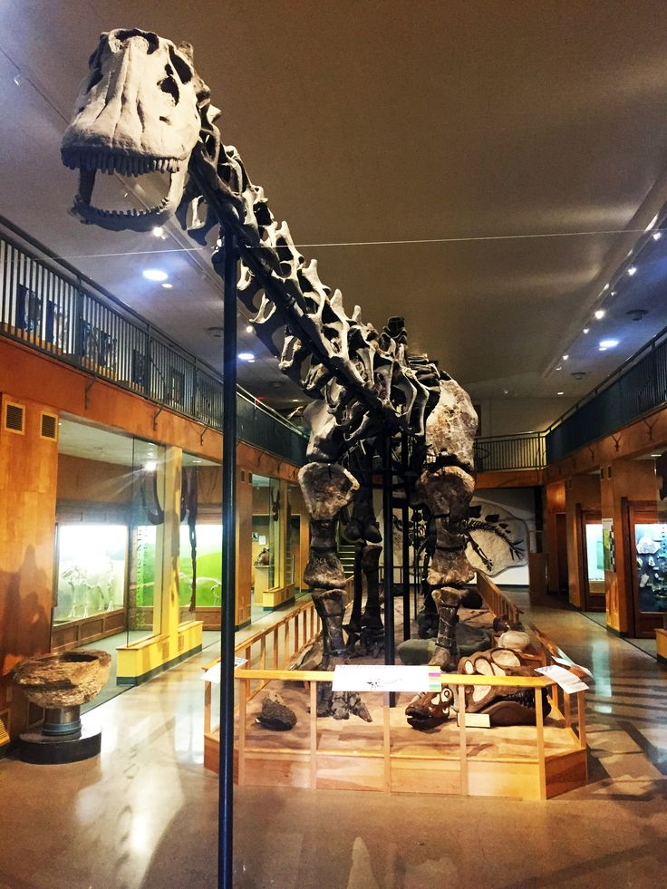 """Dig into Hands-On Paleontological Experiences in Wyoming that Bring Disney•Pixar's """"The Good Dinosaur"""" to Life : Wyoming Tourism"""