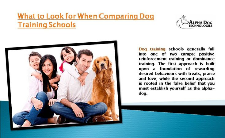 Dog training schools generally fall into one of two camps: positive reinforcement training or dominance training. The first approach is built upon a foundation of rewarding desired behaviours with treats, praise and love; while the second approach is rooted in the false belief that you must establish yourself as the alpha-dog.