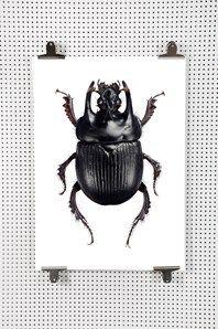 Bakom Göran Liljebergs bilder finns en stor passion för insekter och många års intresse för fotokonst. Många av bilderna har använts som illustrationer i en rad olika böcker, mest facklitteratur. Han fotograferar allt i egen studio och printar själv från egna skrivare. Makrofotografering av små insekter i stor förstoringsgrad har blivit Görans specialité. Målet är att visa naturen precis som den ser ut, med den detaljrikedom, skärpa och det färgomfång som krävs.