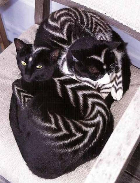 tribal kitties <3 . CURIOUS OF WHAT KIND THEY ARE, CATS OR SOME KIND OF WILD CAT?