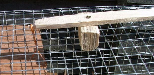 Making a really simple rabbit trap