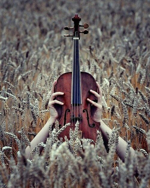 My soul is a hidden orchestra; I know not what instruments what fiddlestrings and harps drums and tamboura I sound and clash inside myself. All I hear is the symphony. Fernando Pessoa The Book of Disquiet .. #m_eye_nd #wizdomly