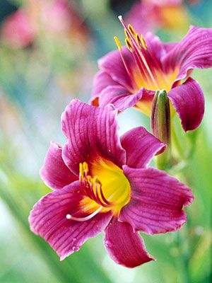 1000 images about perennials for the midwest on pinterest for Earl may nursery garden center