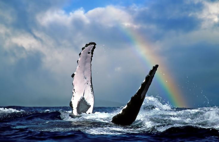 Go whale watching in Waikiki with our Hawaii holiday multi centre package   #holiday #travel #wanderlust #whalewatching