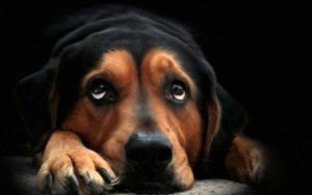La perdita di un cane.Una lettera commovente La perdita di un cane.Una lettera commovente Quando viene a mancare un cane, non muore semplicemente un animale, ma un amico fedele, un compagno, un membro della famiglia. Il dolore che si prova in  #cane #animali #lettera #amore