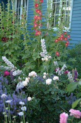 English style garden...in Colorado!: Gardens In Colorado, Gardens Ideas, Gardens Flowing, Cottages Gardens, English Gardens, Colorado Plants, Gardens Yard, Colorado Gardens, General Gardens