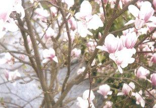 New Blog Post, wann kommt der Frühling? Analog Fotografie by Ricardo Dutkowiak Fotografie