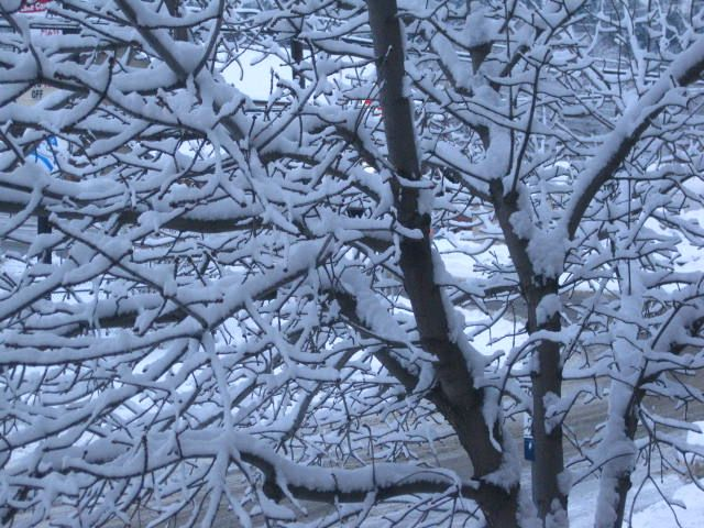 Our second snow of 2015.  Soooo pretty. ♥♥♥