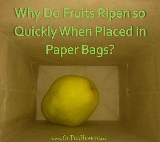 Why is it that fruits ripen when placed in paper sacks? Learn the science behind this kitchen trick.
