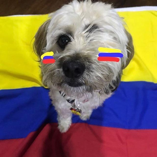 #mundialista #rusia2018 #selecioncolombia #colombiafanboy