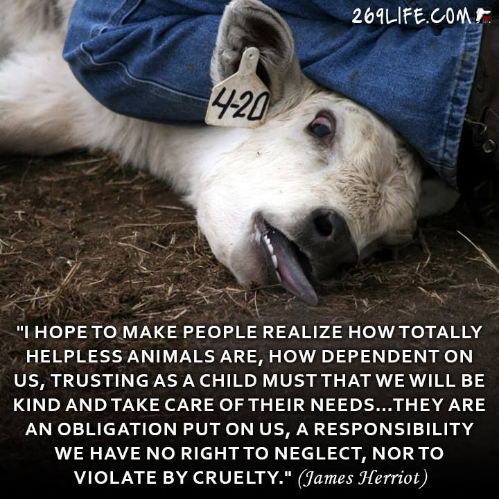 Famous Animal Rights Quotes: 164 Best Images About Famous Vegans/vegetarians On