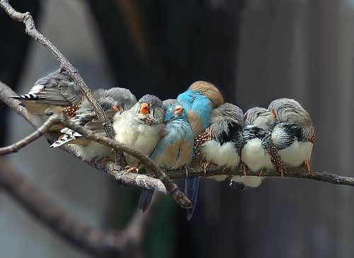 birds: Sleepy Time, Numbers, Little Birds, Still Life Photography, Naps Time, Beautiful Birds, Families, Branches, Adorable Animal