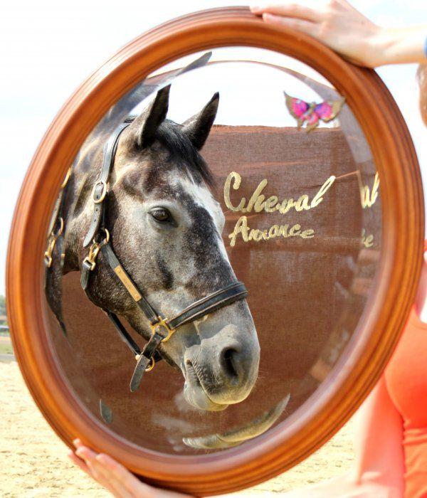 Miroir, dis moi si je pourrais gagner la super selle du concours #CA ! #cheval #concours