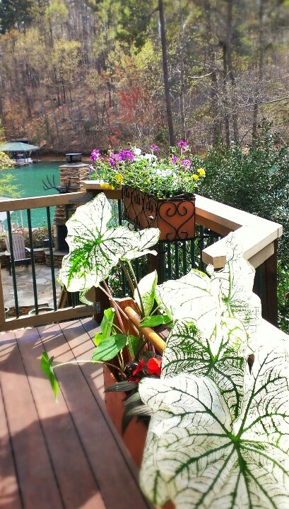 32 Best Images About Outdoor Plant Hangers On Pinterest