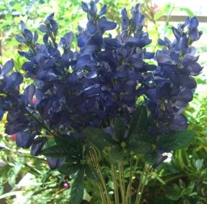 Texas Silk Bluebonnets Box Of 12 For 5 88 Would