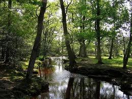 new forest brockenhurst