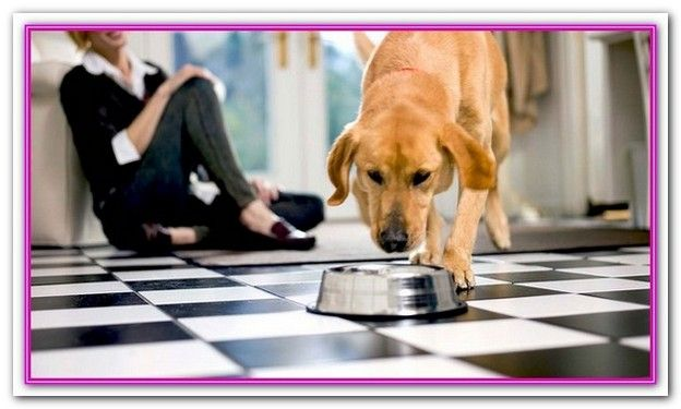 Best Quality Dog Food Australia Below Is A Shortlist Of Our Best