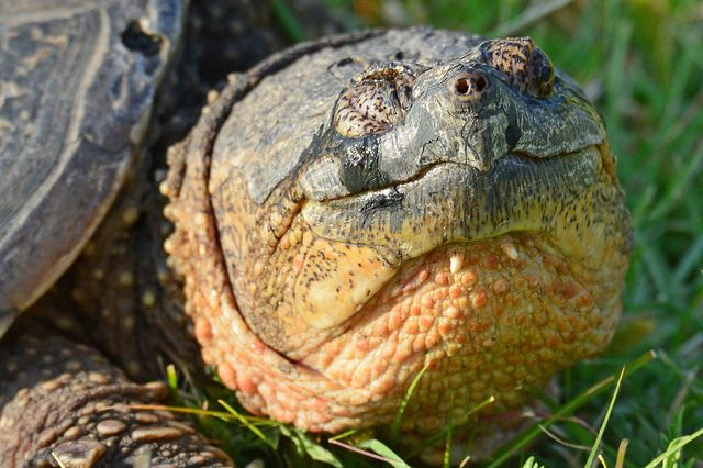 Basic Facts About Gopher Tortoises | Defenders of Wildlife