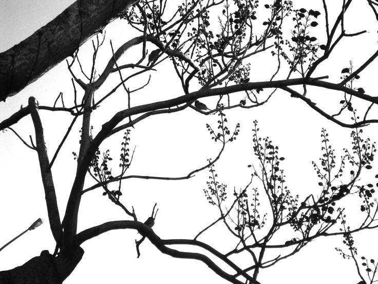 Devonport, Auckland, New Zealand.  - Tree-