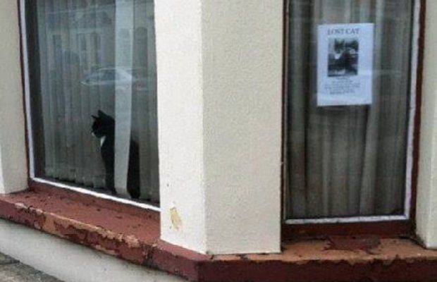 Lost Cat is Seen Next to Lost Cat Poster