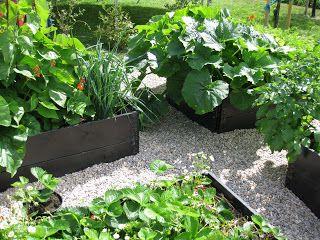 Köksträdgård med grusgångar.