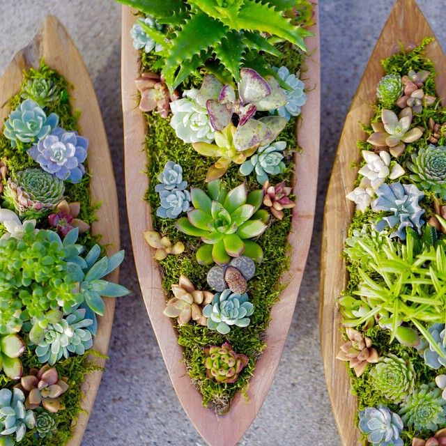 Succulent boat centerpieces by Dalla Vita. // www.dallavita.com