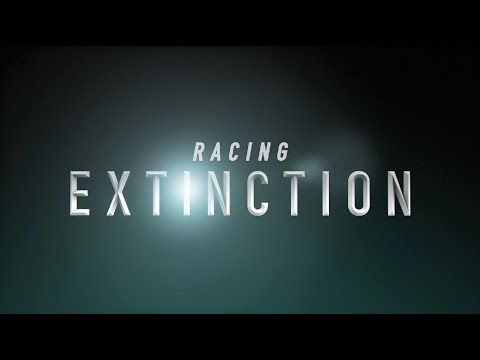 "Racing Extinction: A Must-See Documentary of 2015, World Premier at Sundance » EcoWatch ""One of the standouts premiering at the festival is Racing Extinction. There have been five mass extinctions in the history of our planet and we may be in the midst of a sixth. We could lose up to half the world's species and humans are to blame."