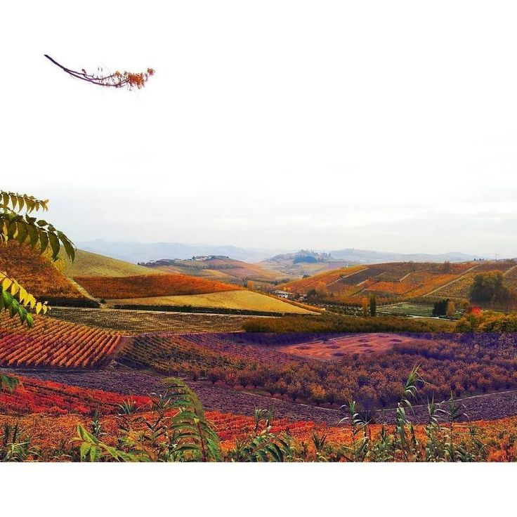 presenta ✳️L A N G H E ✳️ Terre dell' #UNESCO FOTO | @kok3shi LOCAL MANAGER | @berenguez TAG | #ig_cuneo #igcuneo … ift.tt/2xAgbcP https://t.co/Jf6p59LGq8