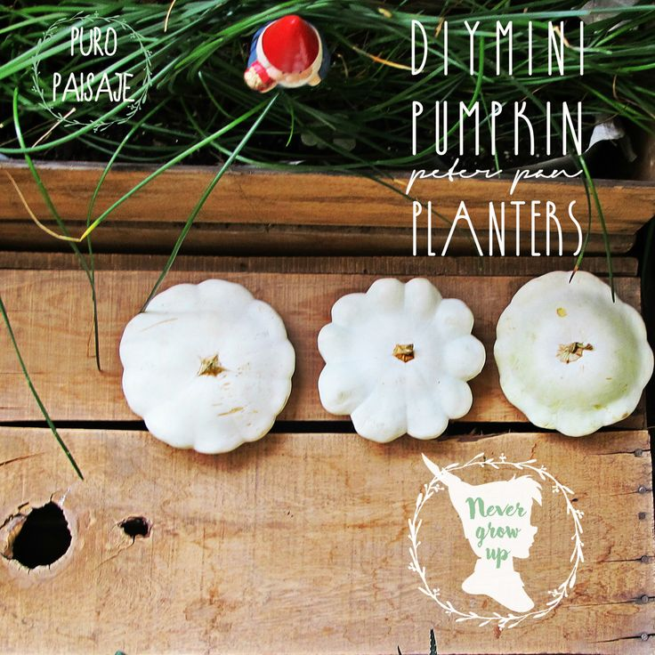 DIY  mini pumpkin planter