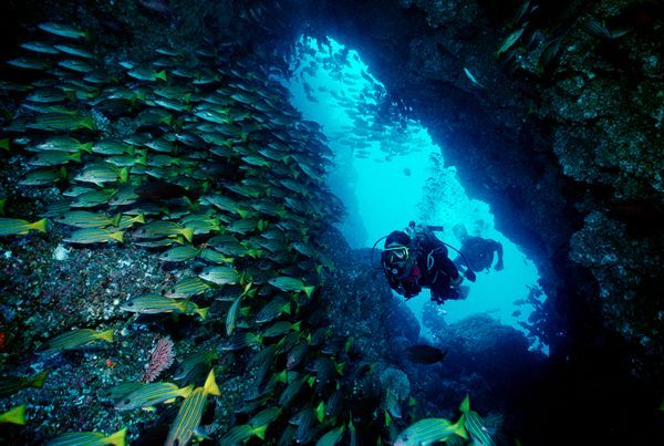 Dive Cocos Island, Costa Rica. (From National Geographic's Ultimate Adventure Bucket List 2012.)