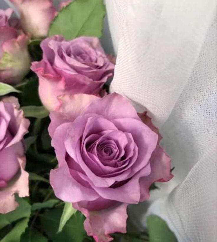 Pin By زهرة الياسمين On Fleurs ورد Flower Rose Plants Flowers