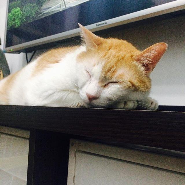 阿瑪:「先睡囉!」Ama:Zzzz #cat #neco #ama