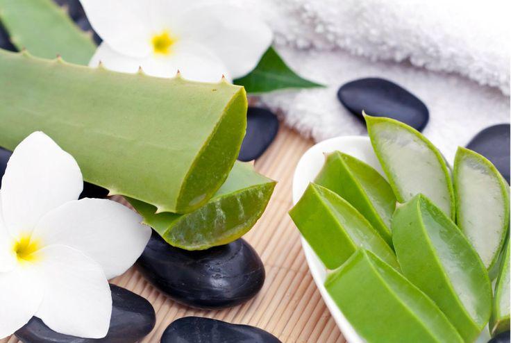 Aloe vera <3 proprietà immunostimolanti, antinfiammatorie, depurative, nutrienti, remineralizzanti.