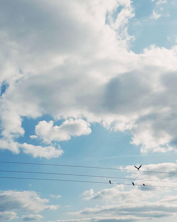 Rozdziobią nas podlaskie kruki wrony  #sky #skyporn #skycolors #cloud #white #clouds #cloudporn #cloudlovers #bluesky #chmury #wrony #podlasie #igerspodlasie