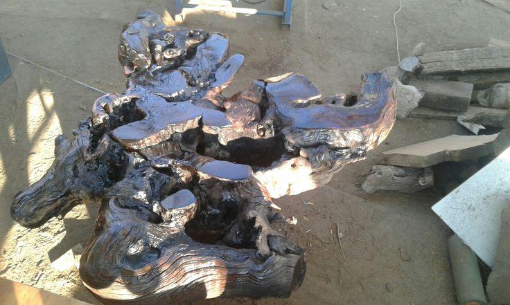 Black Ironwood root table