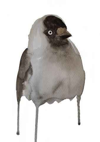 Western jackdaw - Watercolor painting created by the Swedish artist Emma Andersson. Shop: https://www.etsy.com/ca/shop/greenfoxart/items