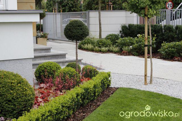 Zimozielony ogród przy białym domu - strona 261 - Forum ogrodnicze - Ogrodowisko