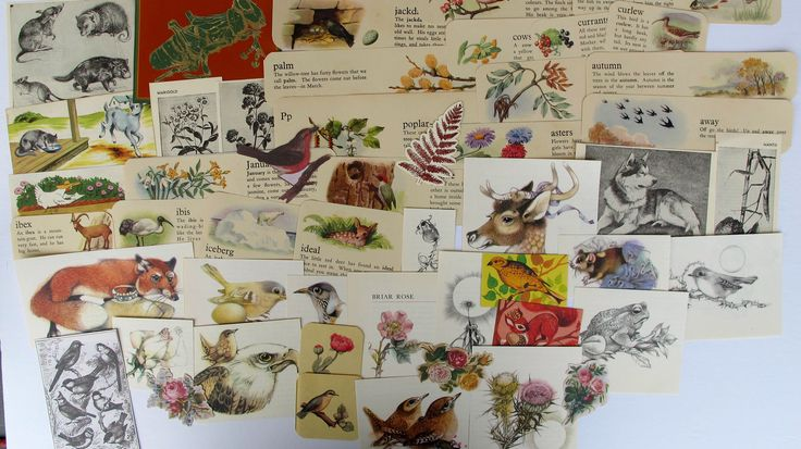 nature and bird themed ephemera for junk journals, smash books, art journals, collage, altered art, gardening, flowers, nature ephemera by BurkeSevenVintage on Etsy https://www.etsy.com/ca/listing/545395213/nature-and-bird-themed-ephemera-for-junk