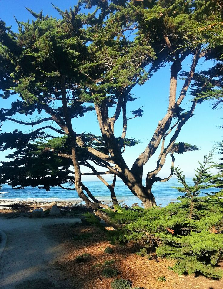 Carmel Beach viewed from the trees along Scenic.
