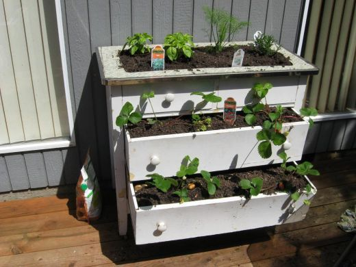 Turn your old dresser (chest of drawers) into a planter box or a container garden
