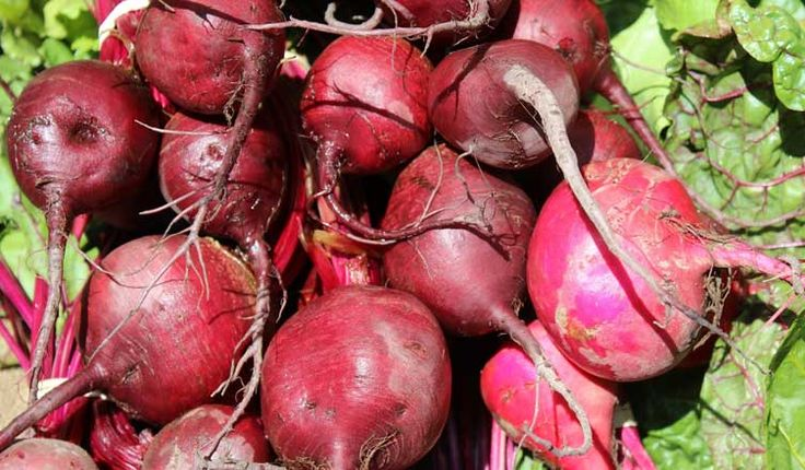 Beets: Nutrition Facts and Health Benefits